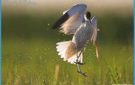 Wildlife Travel To Hortobagy_11.jpg