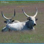 Wildlife Travel To Hortobagy_2.jpg