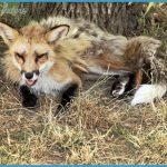 Wildlife Travel To Hortobagy_7.jpg