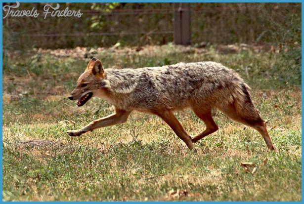 Wildlife Travel To Hortobagy_9.jpg
