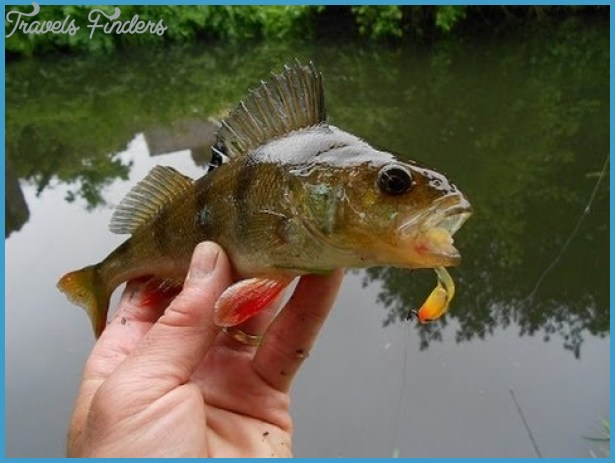 Best bait for canal fishing travelsfinders com for Best fish bait