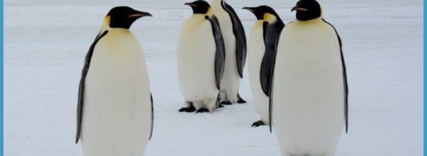 Antarctica Travel Emperor Penguins_0.jpg