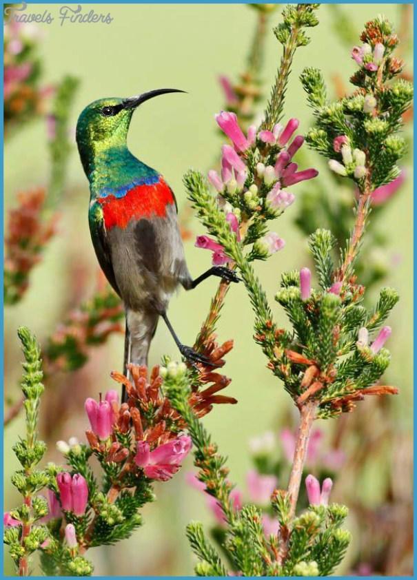 Kirstenbosch Trip Planner_13.jpg