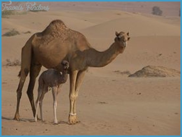 Saudi Arabia Plants and Animals _6.jpg