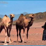 Saudi Arabia Plants and Animals _9.jpg