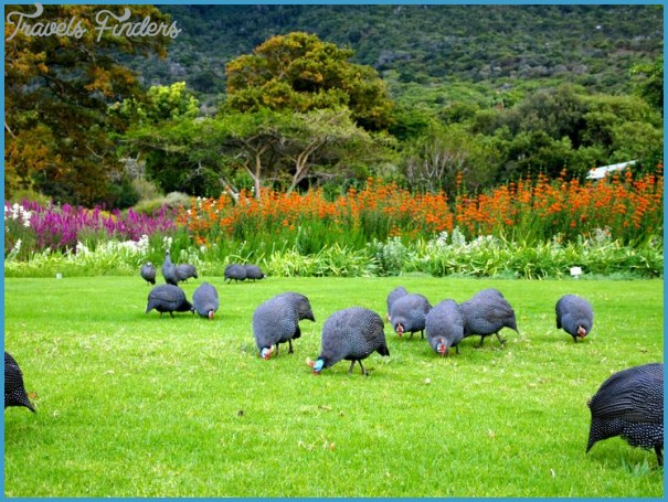 Working in Kirstenbosch_7.jpg