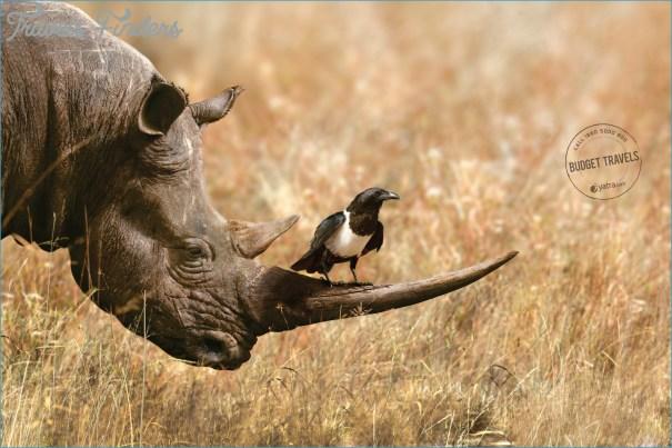 yatracom-budget-travels-rhino-2000-83389.jpg