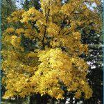 hickory-pruning.jpg