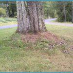 oak-tree-buried-flare.jpg