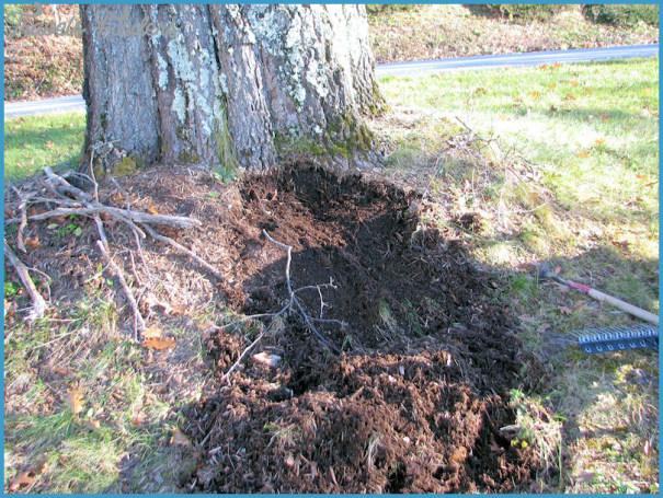 oak-tree-mulch-removed.jpg