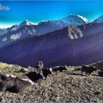 Trekking to Poon Hill Viewpoint for Sunrise view of Annapurna One Annapurna Fang Nepal Hike_16.jpg