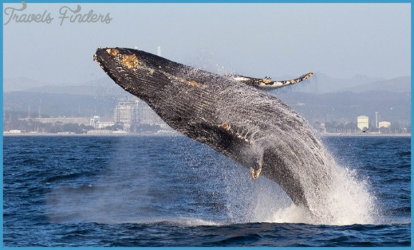 Whale Watching Tours That You Will Always Remember_12.jpg