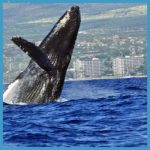 Whale Watching Tours That You Will Always Remember_15.jpg