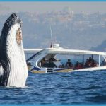 Whale Watching Tours That You Will Always Remember_16.jpg