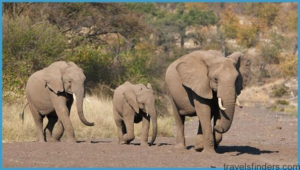 14302-intergenerational-african-wildlife-encounters-elephants-LgHoz.jpg