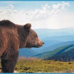 Alaska_Land.jpg