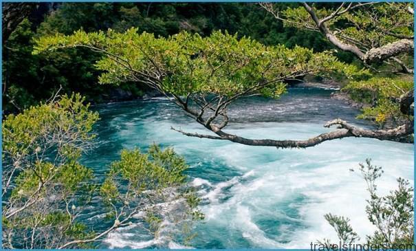 chiloe-photos-araucaria-forests.jpg?t\u003d1Dy3fb\u0026itok\u003dYTmZ0kbn