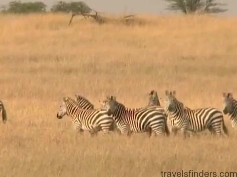 explore the nature of il moran camp in kenya360p 07