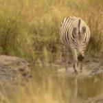explore the nature of il moran camp in kenya360p 10