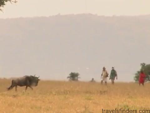explore the nature of il moran camp in kenya360p 19
