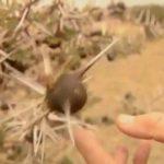 explore the nature of il moran camp in kenya360p 23