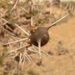 explore the nature of il moran camp in kenya360p 24