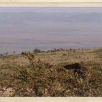 kenya, tanzania vacation hd 04