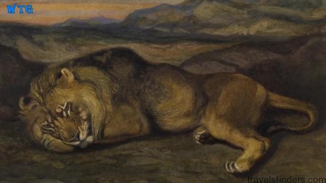 lions of zimbabwe hd 1080p 21