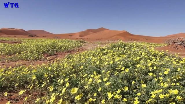 namibia safari, namibia beaches hd 1080p 02