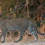 namibia safari, namibia beaches hd 1080p 04