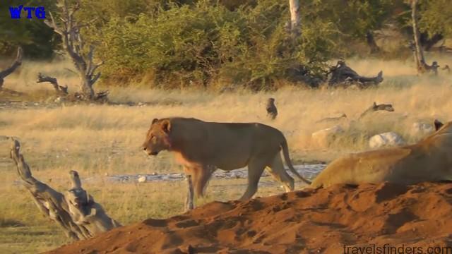 namibia safari, namibia beaches hd 1080p 51