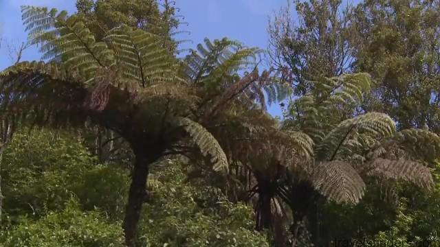 new zealand tourism vacations hd 14