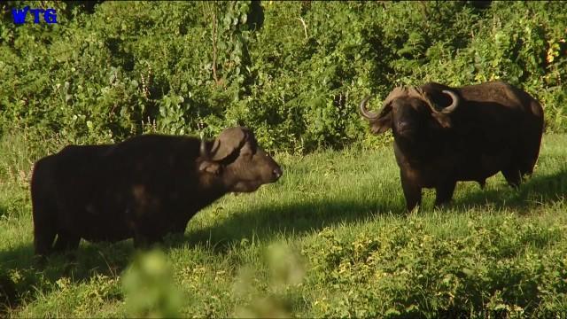 ngorongoro crater tanzania safaris hd 1080p 02