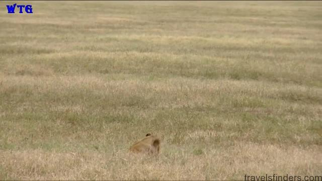 ngorongoro crater tanzania safaris hd 1080p 15