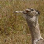 ngorongoro crater tanzania safaris hd 1080p 23