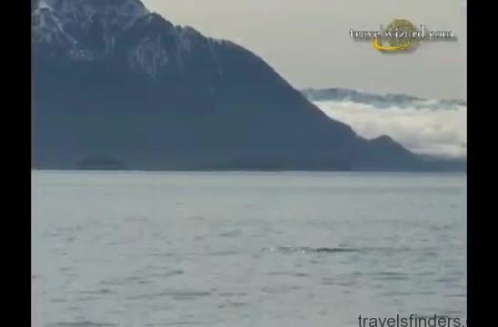 tour in alaska coastal wilderness, travel guide360p 35