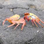 travel to galapagos islands with tour guides hd 03