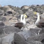 travel to galapagos islands with tour guides hd 08