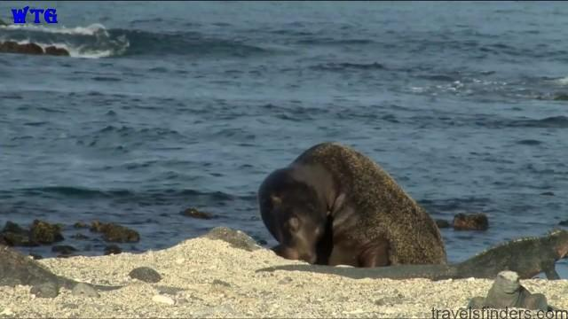 travel to galapagos islands with tour guides hd 15