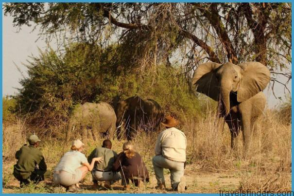 walking-safar-with-norman-carr-elephants-590x390.jpg