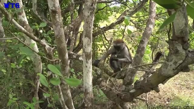 zanzibar island tourism, tanzania hd 1080p 06