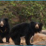 Hampi - Daroji Sloth Bear Sanctuary_1.jpg