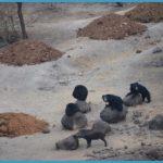 Hampi - Daroji Sloth Bear Sanctuary_11.jpg