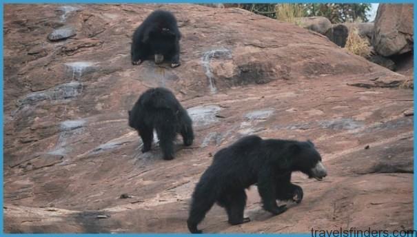 Hampi - Daroji Sloth Bear Sanctuary_2.jpg