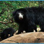 Hampi - Daroji Sloth Bear Sanctuary_3.jpg