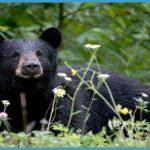 Hampi - Daroji Sloth Bear Sanctuary_7.jpg