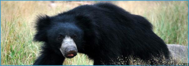 Hampi - Daroji Sloth Bear Sanctuary_8.jpg