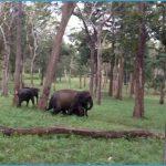 K.Gudi Wilderness Camp - Jungle Lodges, and Resorts B R Tiger Reserve India Ghoomo_0.jpg