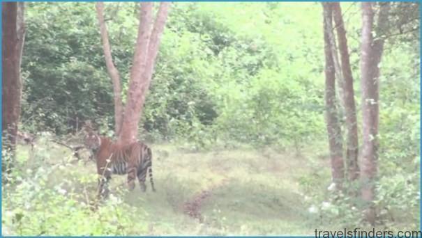 K.Gudi Wilderness Camp - Jungle Lodges, and Resorts B R Tiger Reserve India Ghoomo_2.jpg