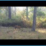 K.Gudi Wilderness Camp - Jungle Lodges, and Resorts B R Tiger Reserve India Ghoomo_3.jpg